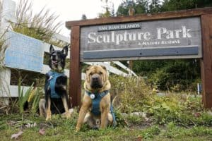 San Juan Islands: A Pet Friendly Adventure | GoPetFriendly.com