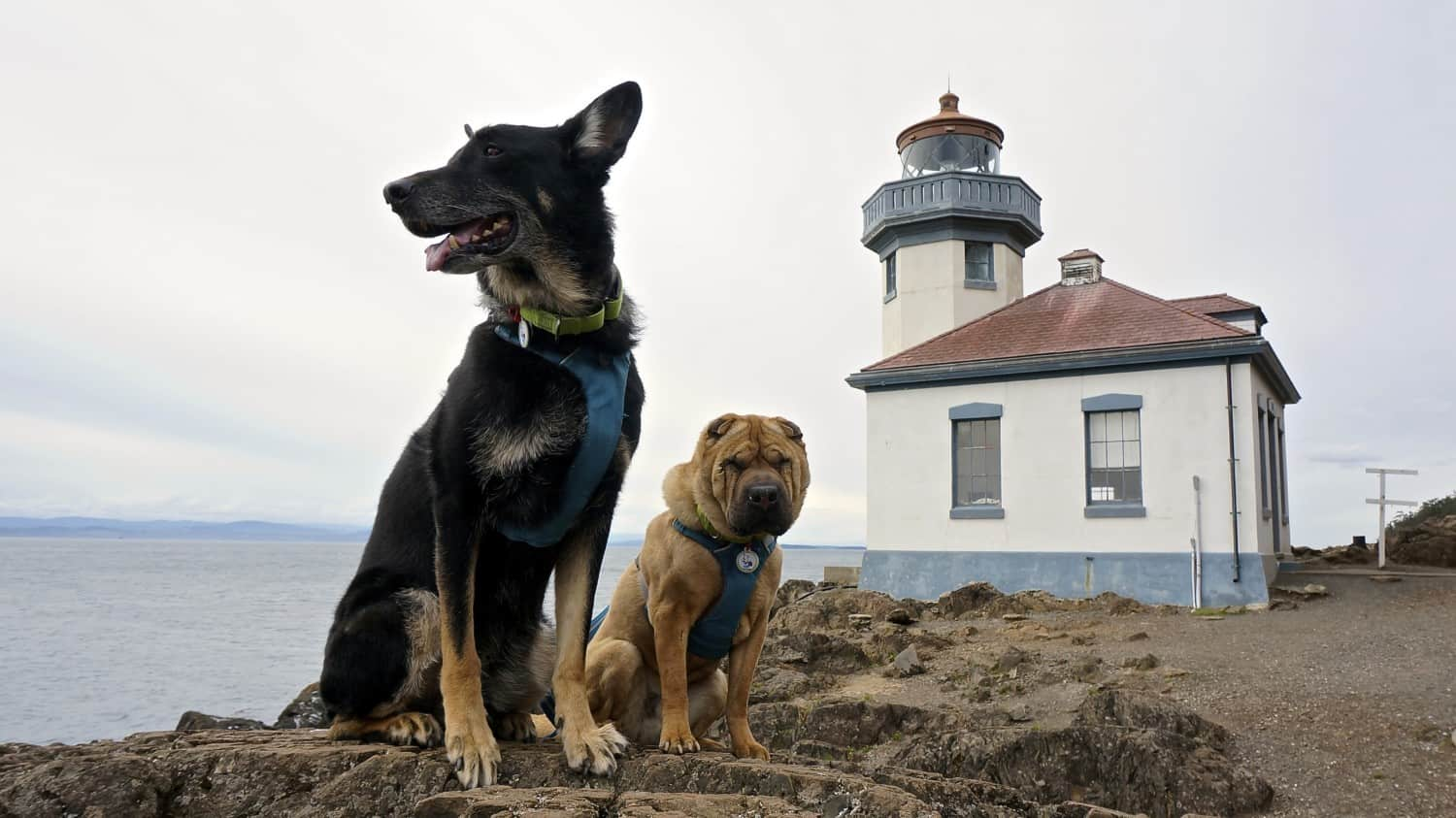 Visiting San Juan Island: A Pet Friendly Adventure