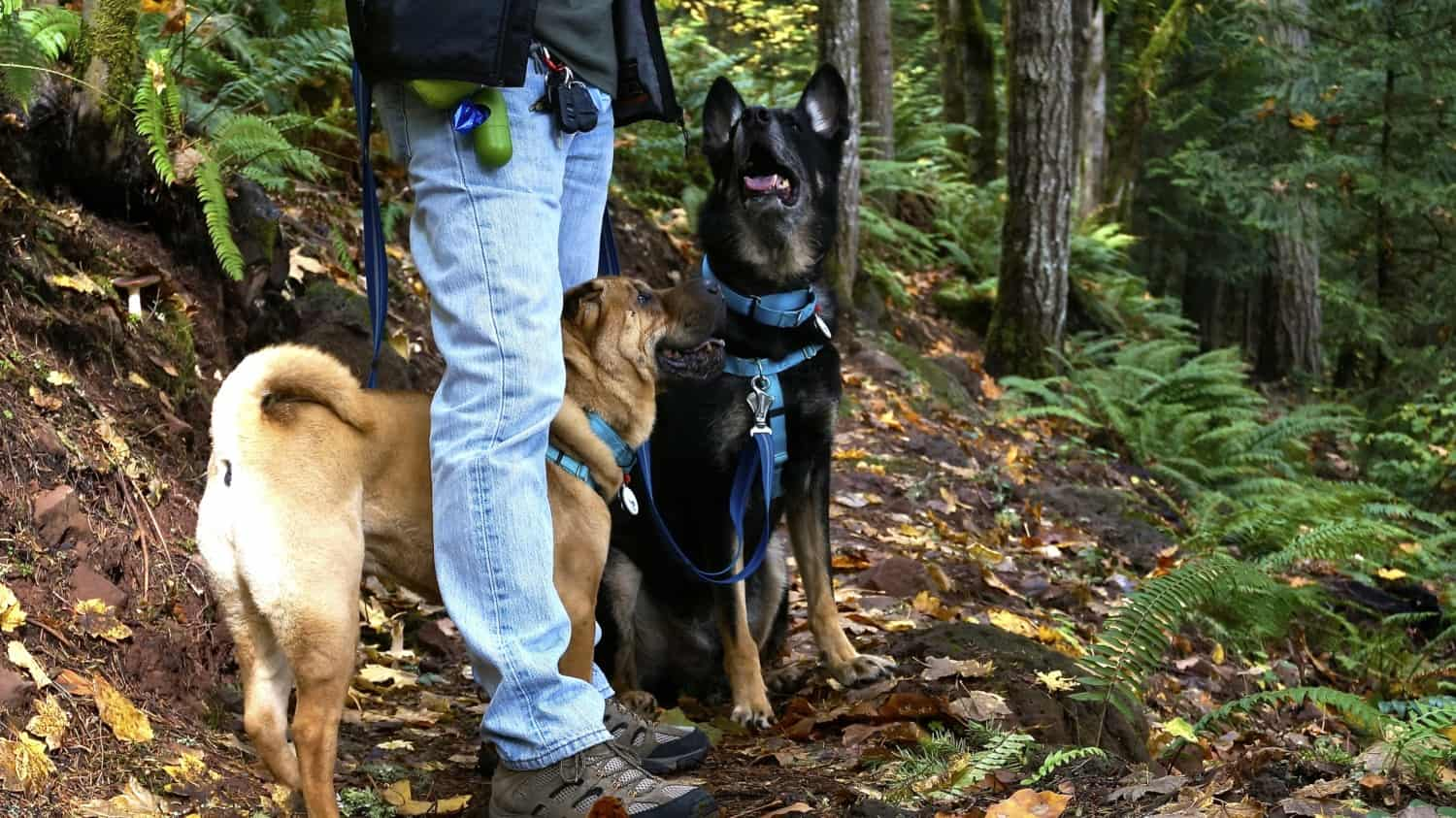Battle Ground Lake State Park: A Dog Friendly Day Trip from Portland