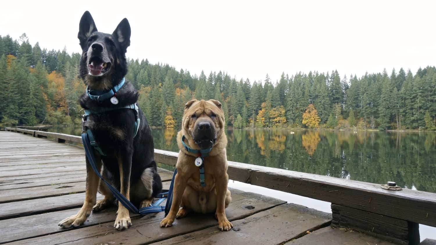 A Dog Friendly Day Trip from Portland | GoPetFriendly.com