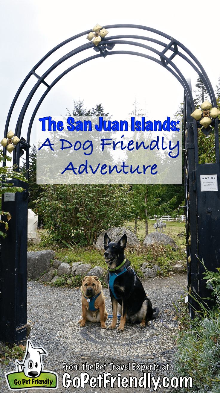 Shar-pei and German Shepherd Dog sitting under a wrought iron arch on San Juan Island, WA