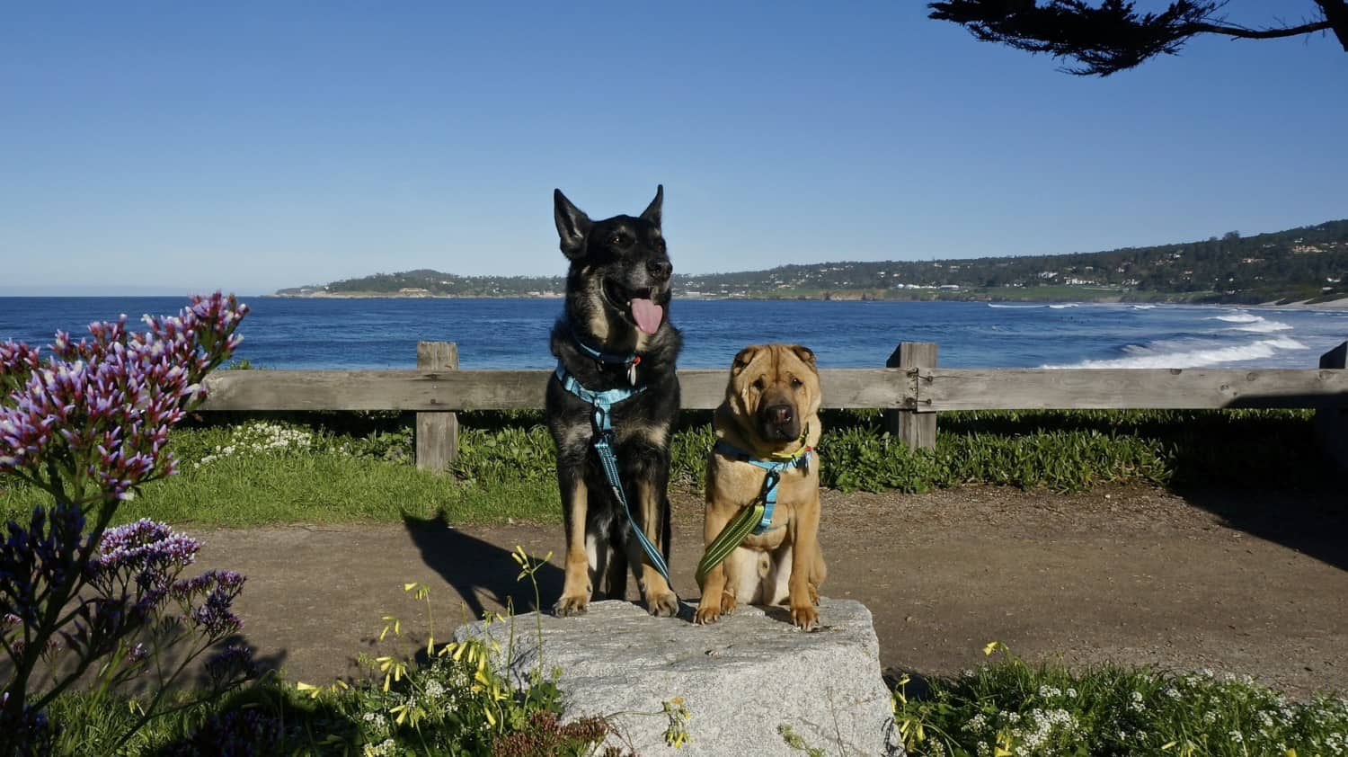 California's Top Pet Friendly Attraction: Carmel Beach