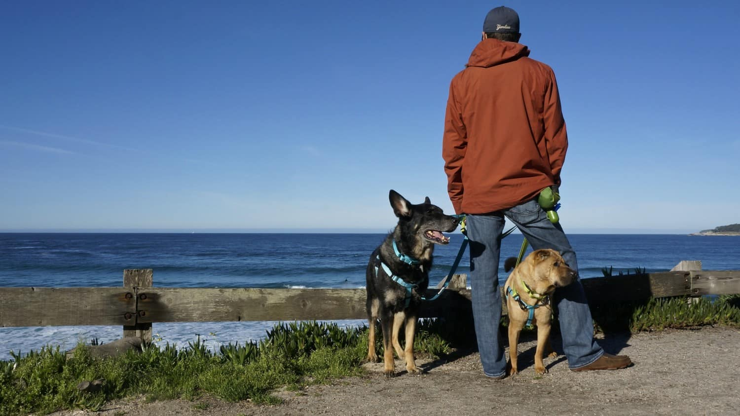 California's Top Pet Friendly Attraction: Carmel Beach | GoPetFriendly.com