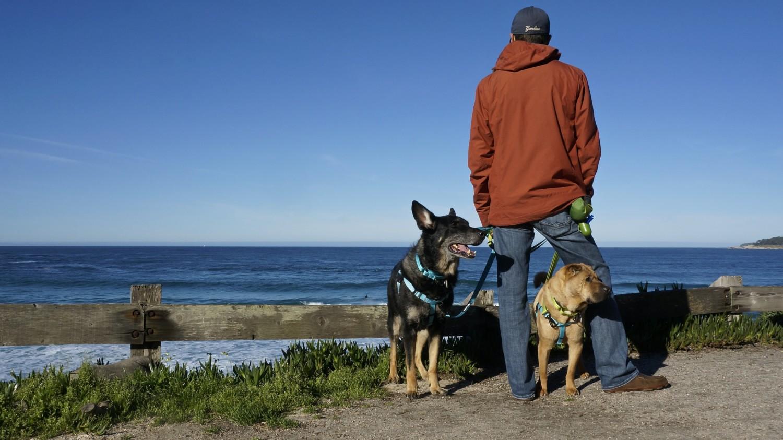 California's Top Pet Friendly Attraction: Carmel Beach | GoPetFriendly.com