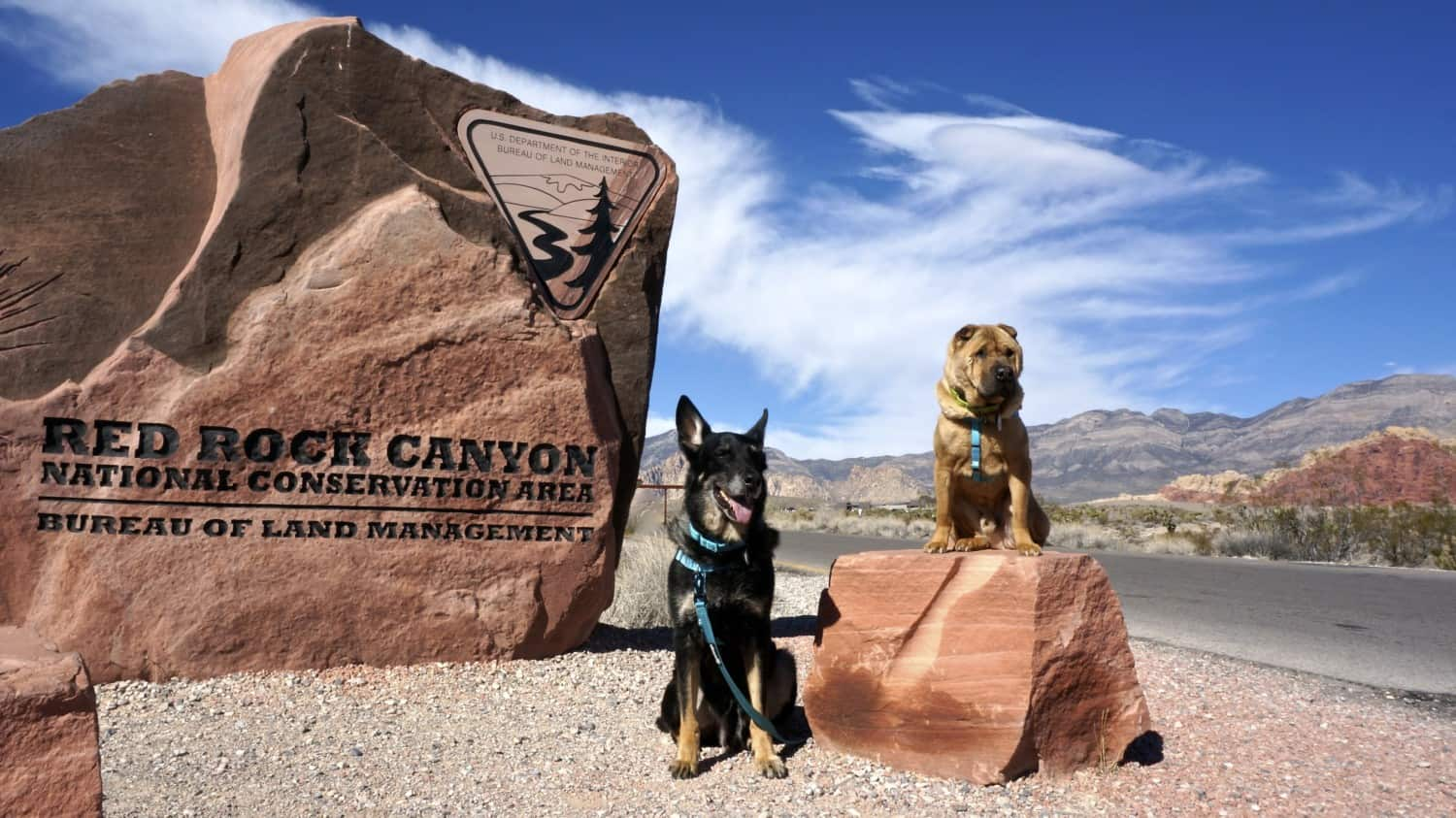 Nevada's Top Pet Friendly Attraction: Red Rock Canyon