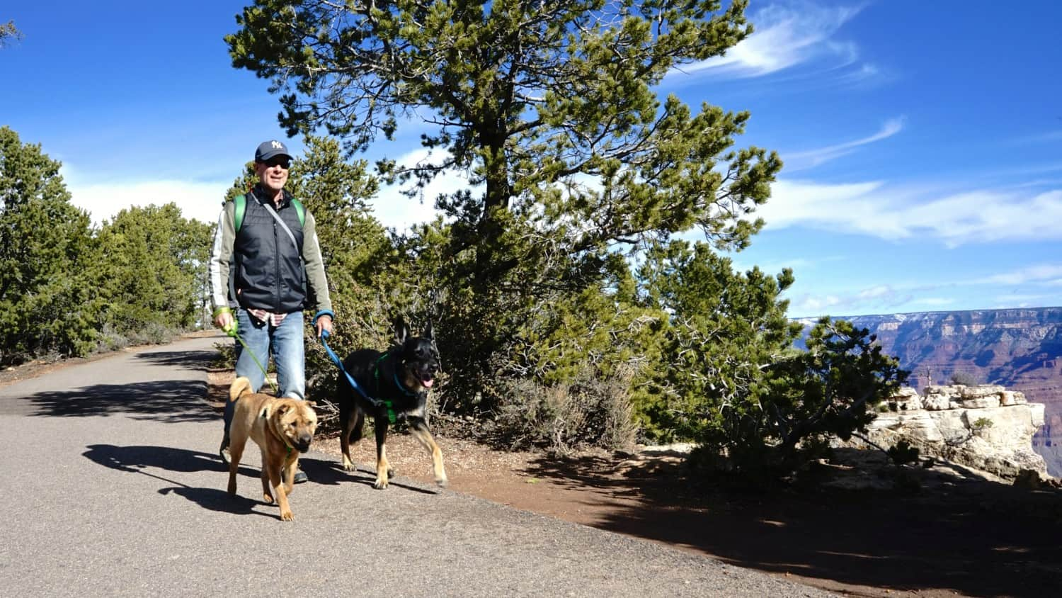 Man walking a German Shepherd Dog and Shar-pei on the pet friendly trail at Grand Canyon National Park, Arizona