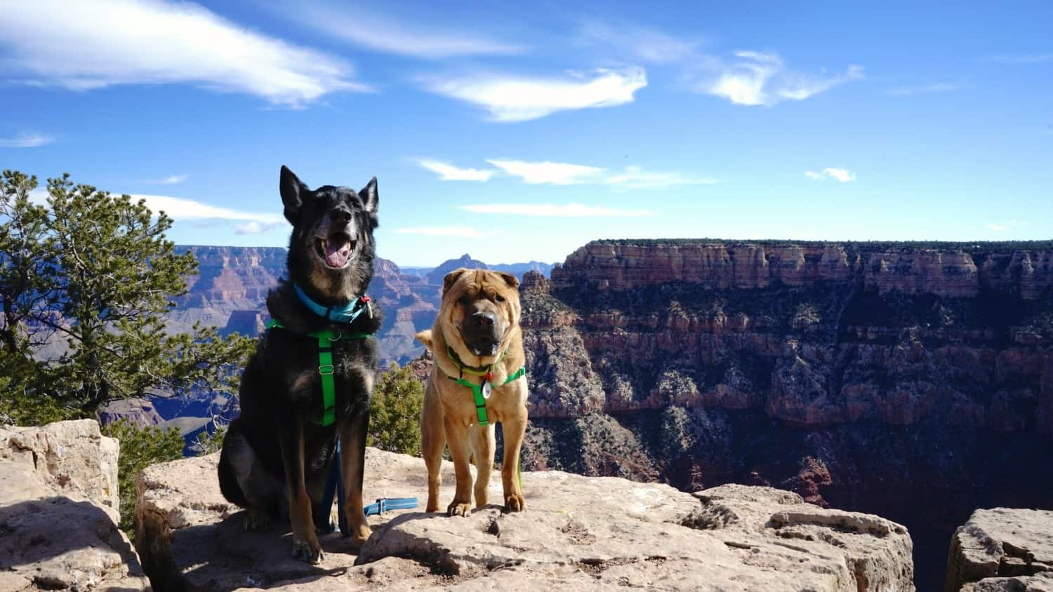 Dogs posing for picture on the South Rim Trail at Grand Canyon National Park, Arizona