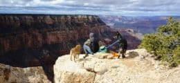 Best Dog Friendly National Parks in the US