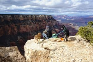 Man and two dogs enjoying the view at Grand Canyon National Park
