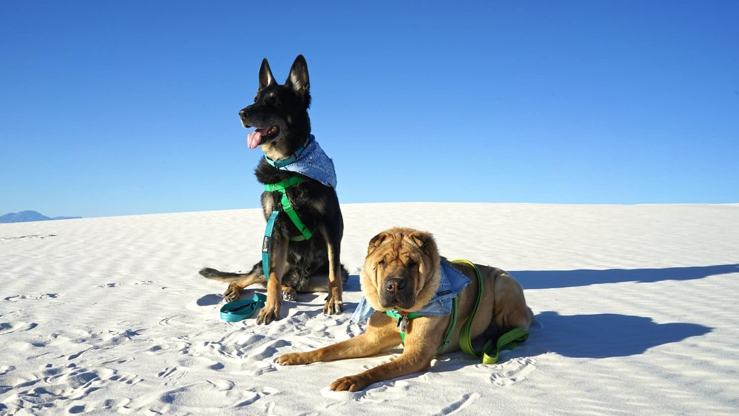 Pet Friendly National Park: White Sands