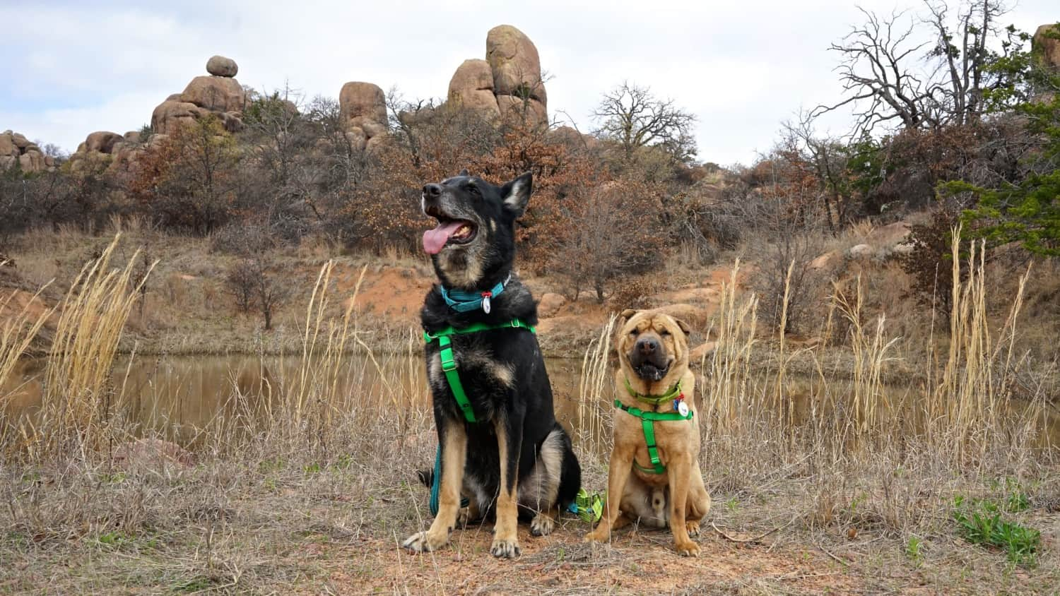 Oklahoma's Top Pet Friendly Attraction: Wichita Mountains Wildlife Refuge