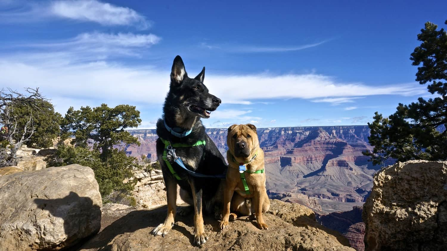 Pet Friendly National Park: The Grand Canyon