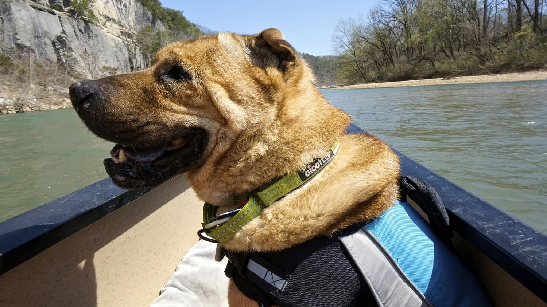 Arkansas' Top Pet Friendly Attractions: Buffalo National River   GoPetFriendly.com