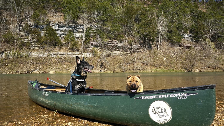 Arkansas' Top Pet Friendly Attraction: Buffalo National River
