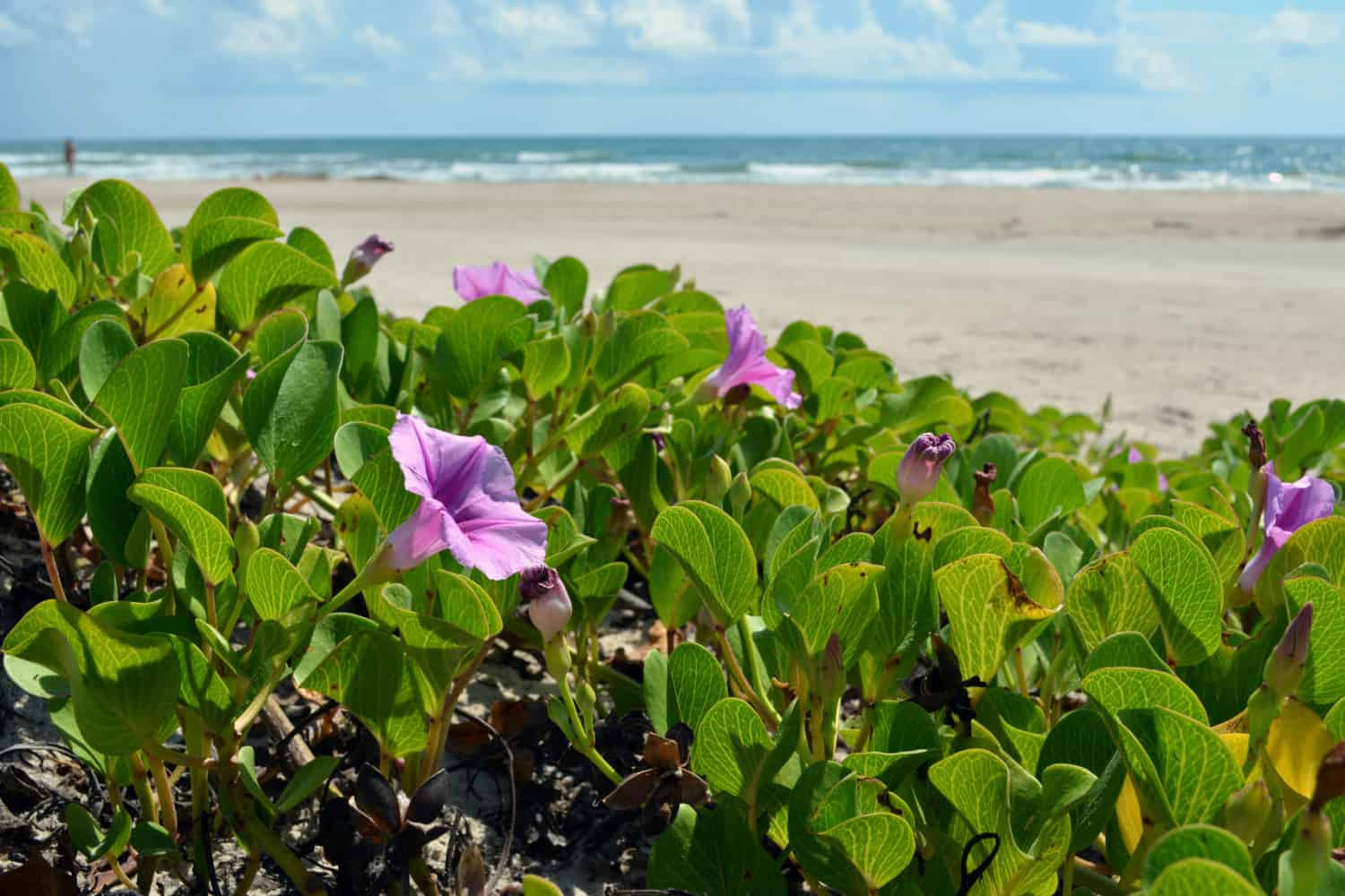 Dog Friendly Padre Island National Seashore | GoPetFriendly.com
