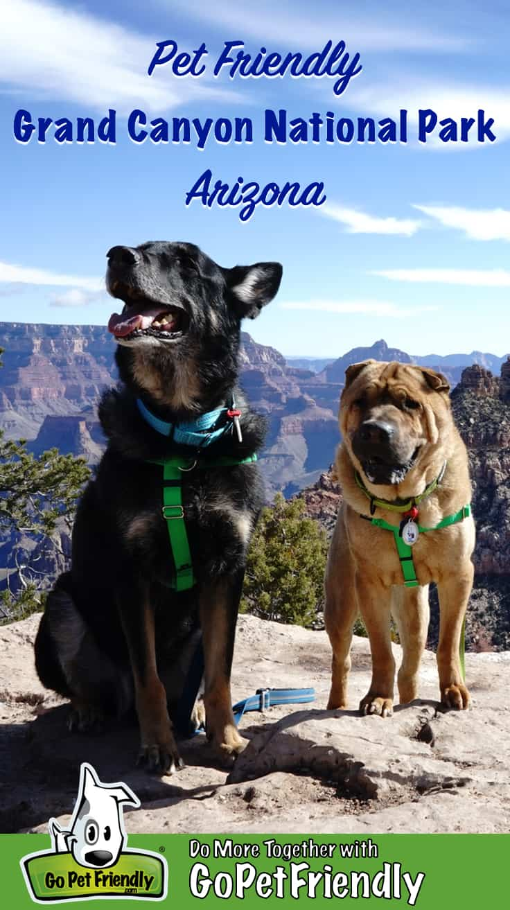 German Shepherd Dog and Shar-pei on the pet friendly trail at Grand Canyon National Park, Arizona