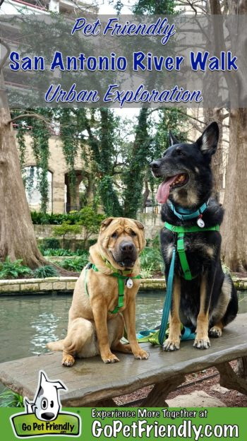 Two dogs sitting on a bench on the River Walk in pet friendly San Antonio, TX