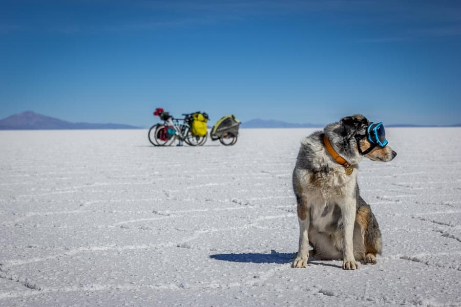 Ultimate Guide to Cycling Vacations with Pets | GoPetFriendly.com