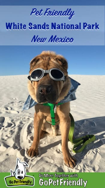 Shar-pei dog in googles at White Sands National park in NM