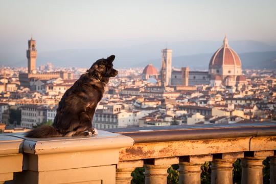 VanDoggo Italy Florence View