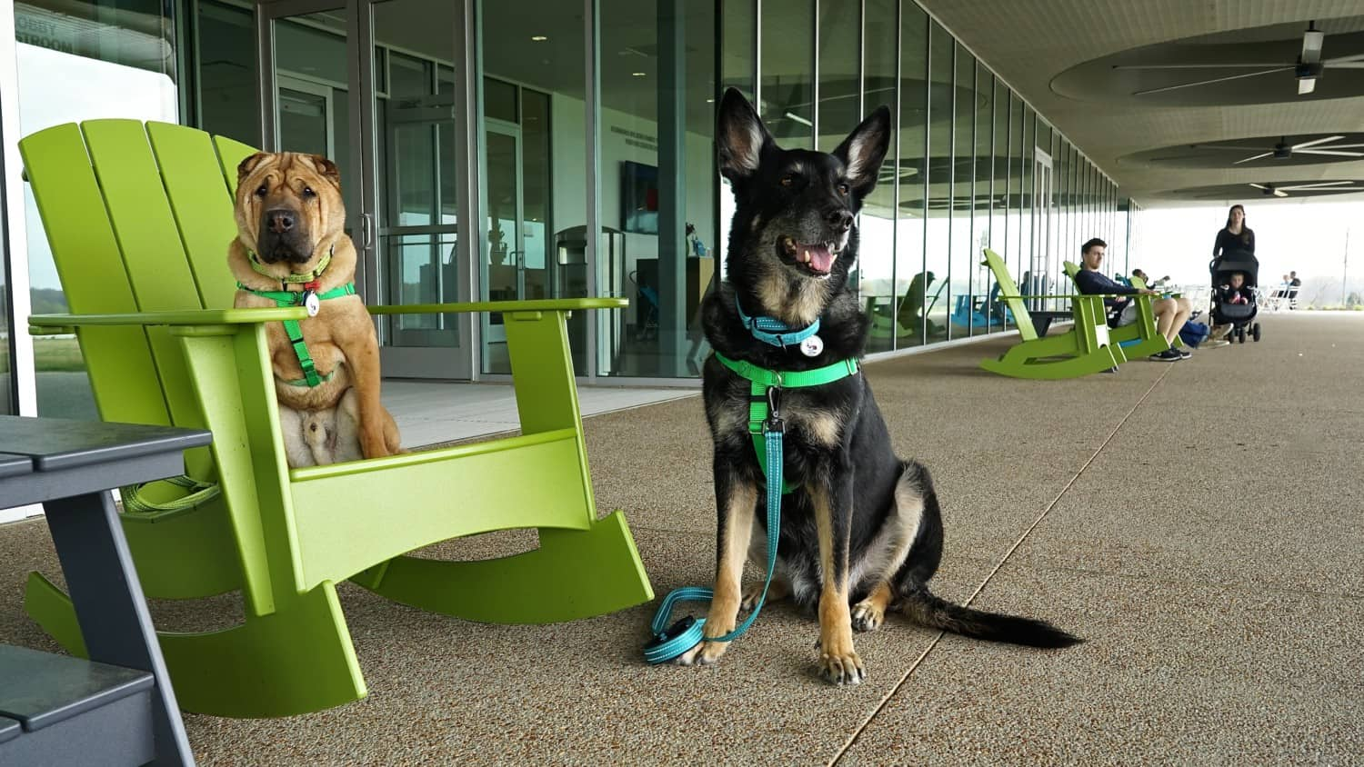 Tennessee's Top Pet Friendly Attraction: Shelby Farms Park