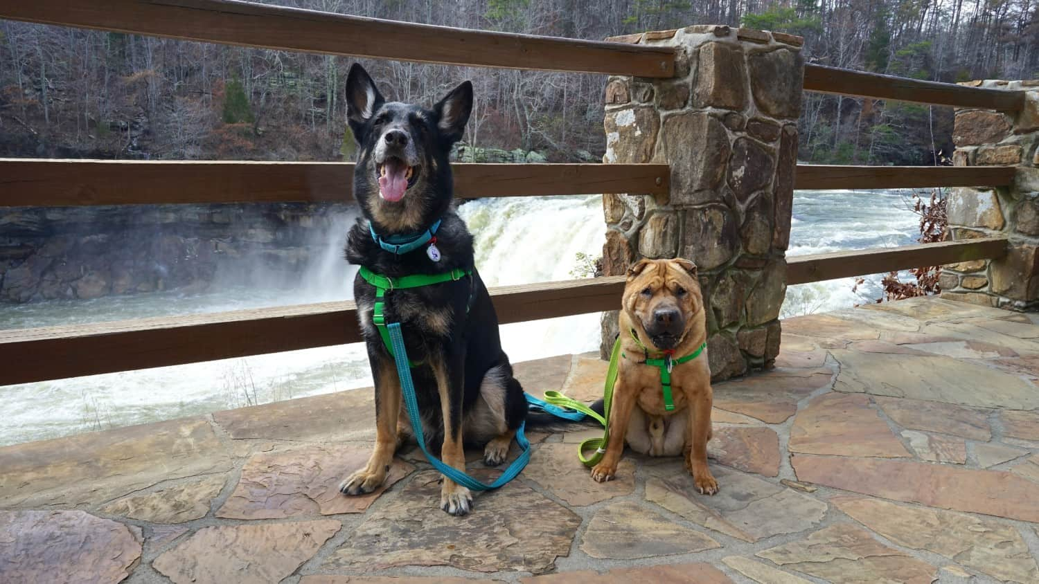 Alabama's Top Pet Friendly Attraction: Little River Canyon | GoPetFriendly.com