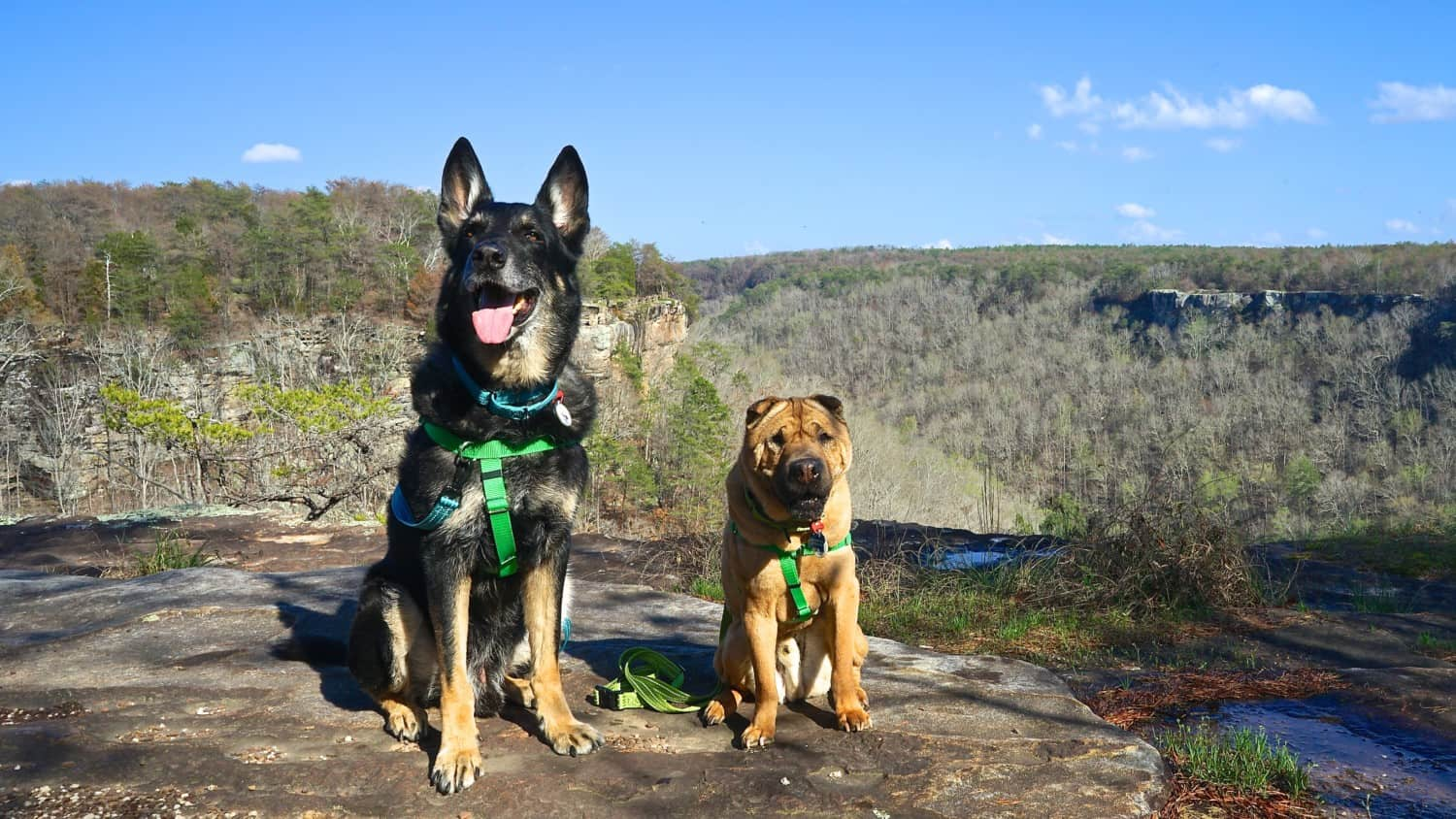 Alabama's Top Pet Friendly Attraction: Little River Canyon