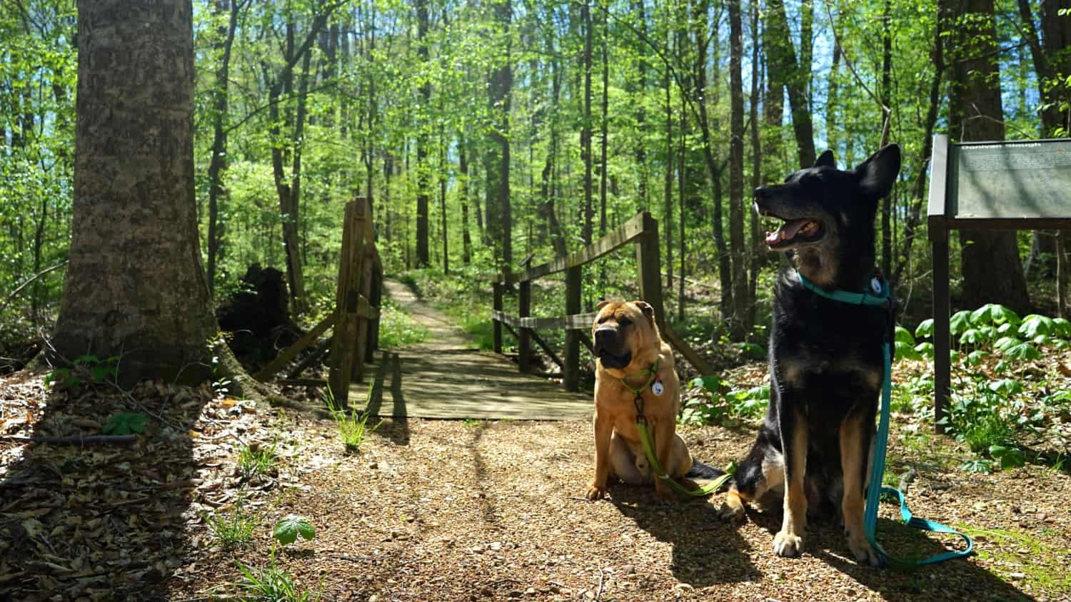 Mississippi's Top Pet Friendly Attraction: The Natchez Trace | GoPetFriendly.com