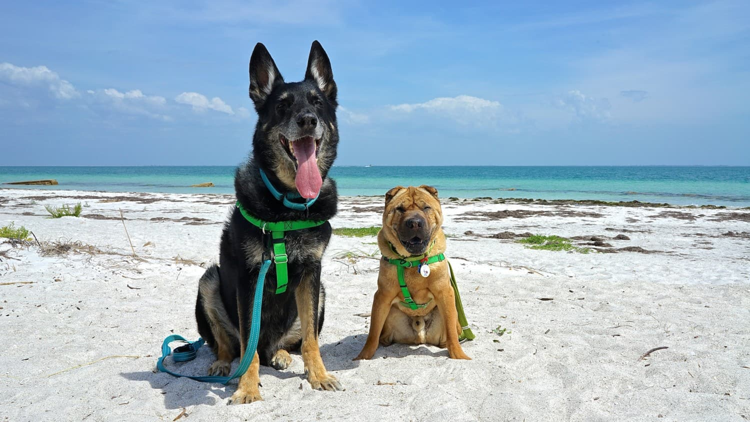 Florida's Top Pet Friendly Attraction: Fort De Soto Park and Dog Beach