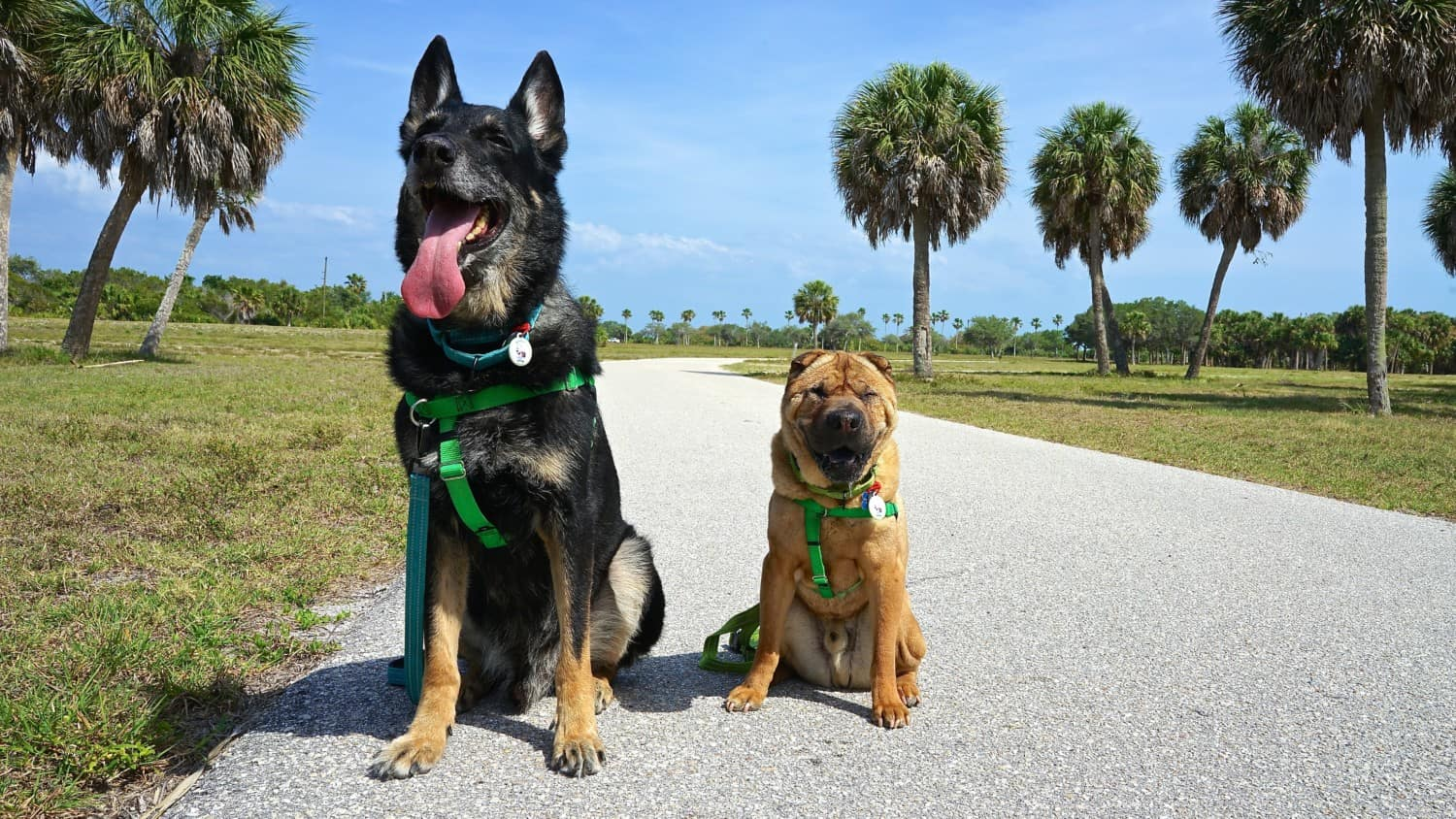 Florida's Top Pet Friendly Attraction: Fort De Soto Park and Dog Beach | GoPetFriendly.com