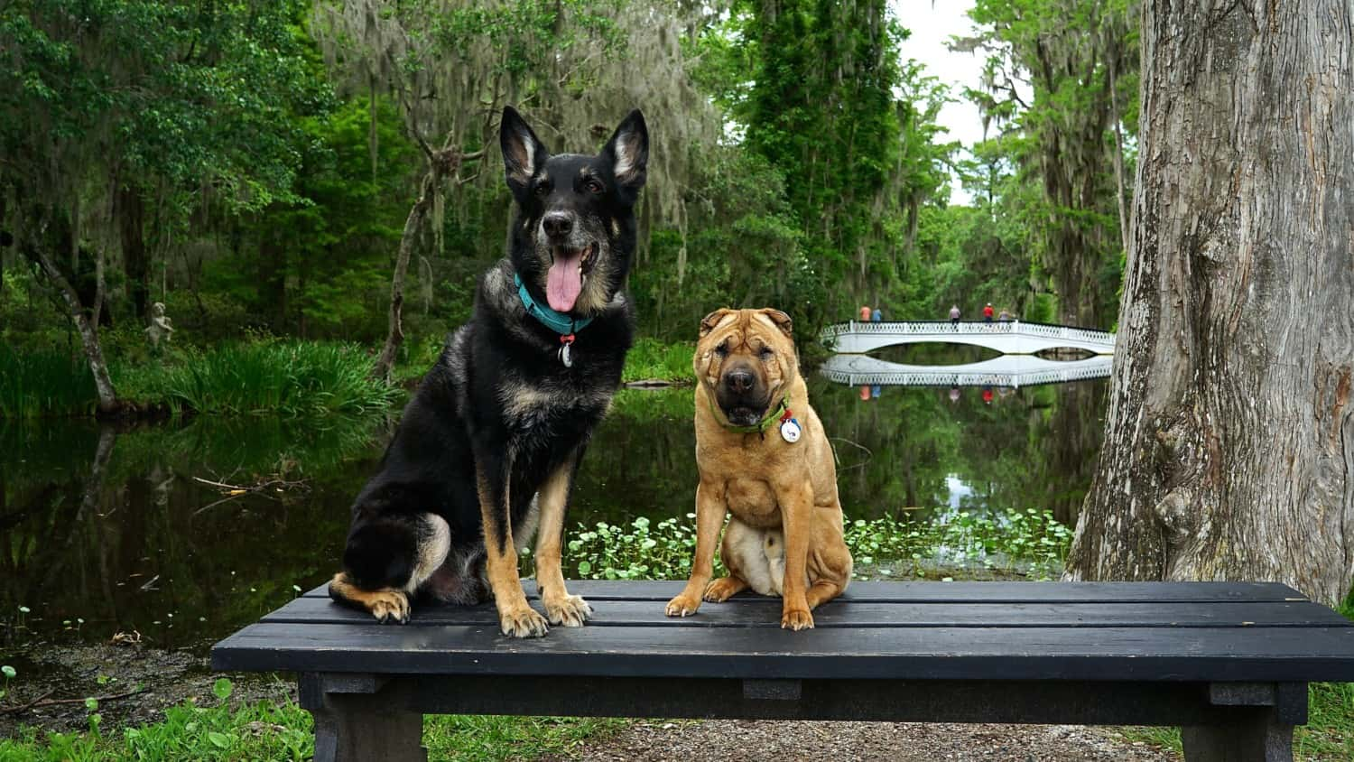 South Carolina's Top Pet Friendly Attraction: Magnolia Plantation & Gardens | GoPetFriendly.com