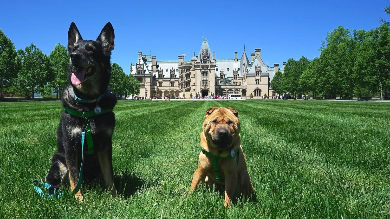 North Carolina's Top Pet Friendly Attraction: Biltmore Estate