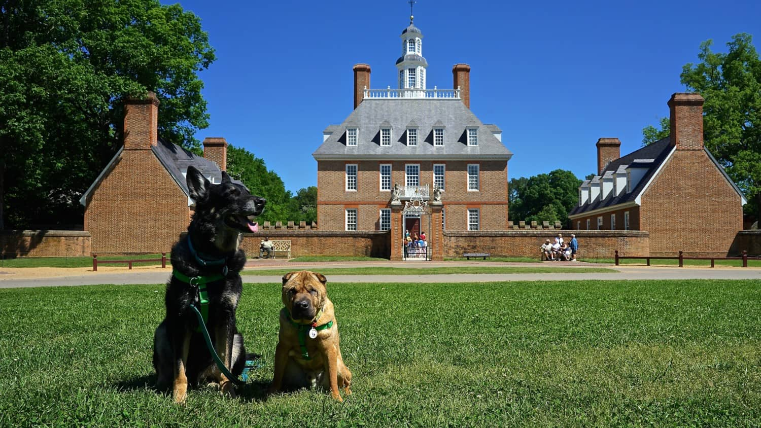 Virginia's Top Pet Friendly Attraction: Colonial Williamsburg