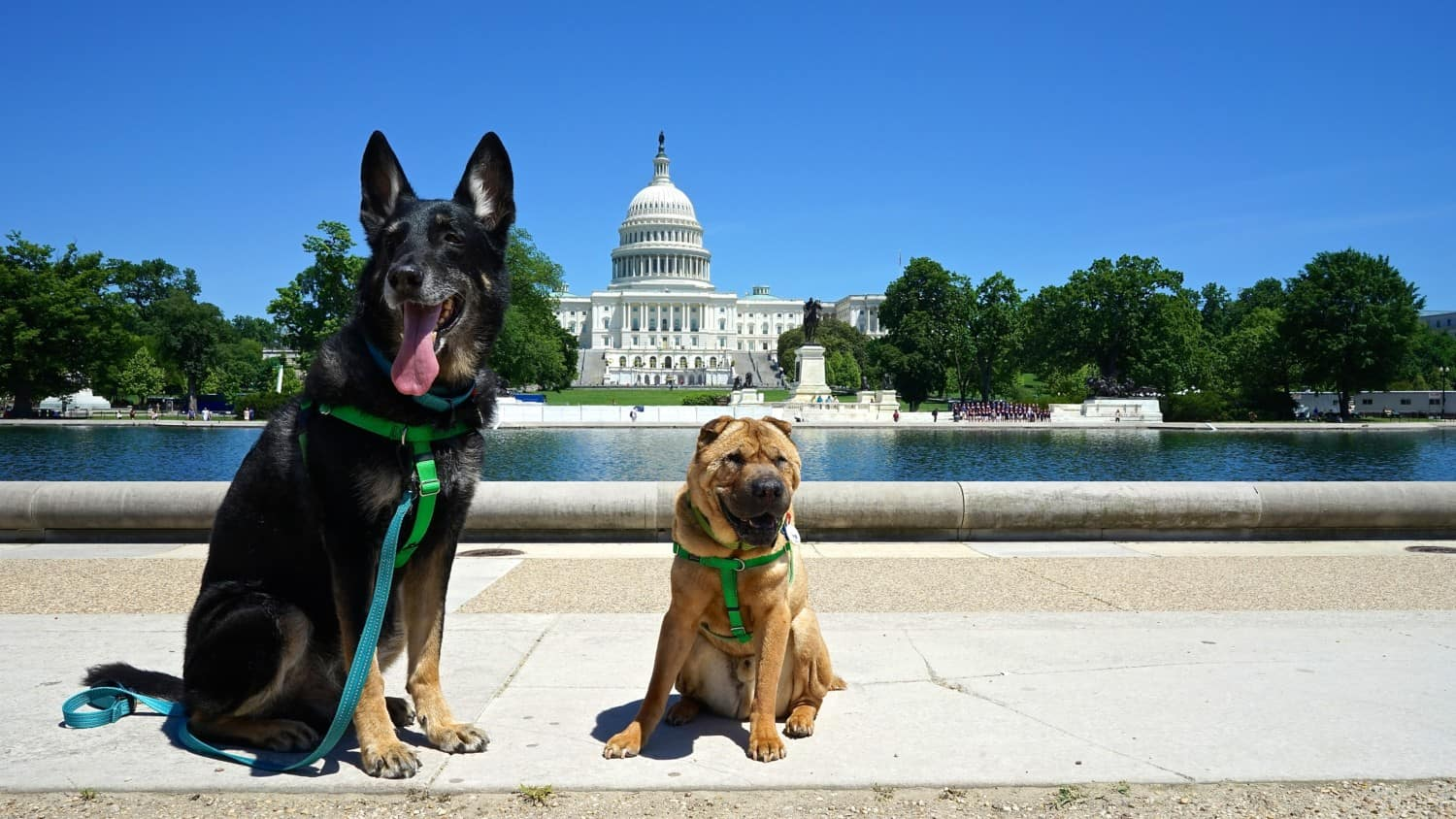 Buster and Ty, the GoPetFriendly.com dogs in Washington DC