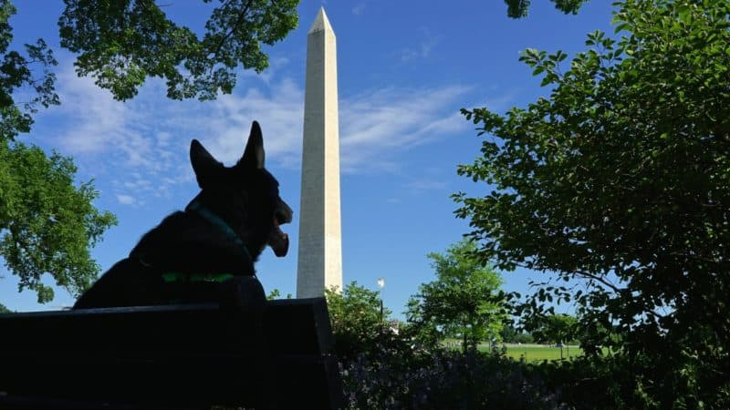 Washington D.C.'s Top Pet Friendly Attractions: The National Mall | GoPetFriendly.com