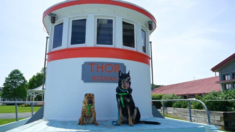 Maryland's Top Pet Friendly Attraction: The Chesapeake Bay | GoPetFriendly.com