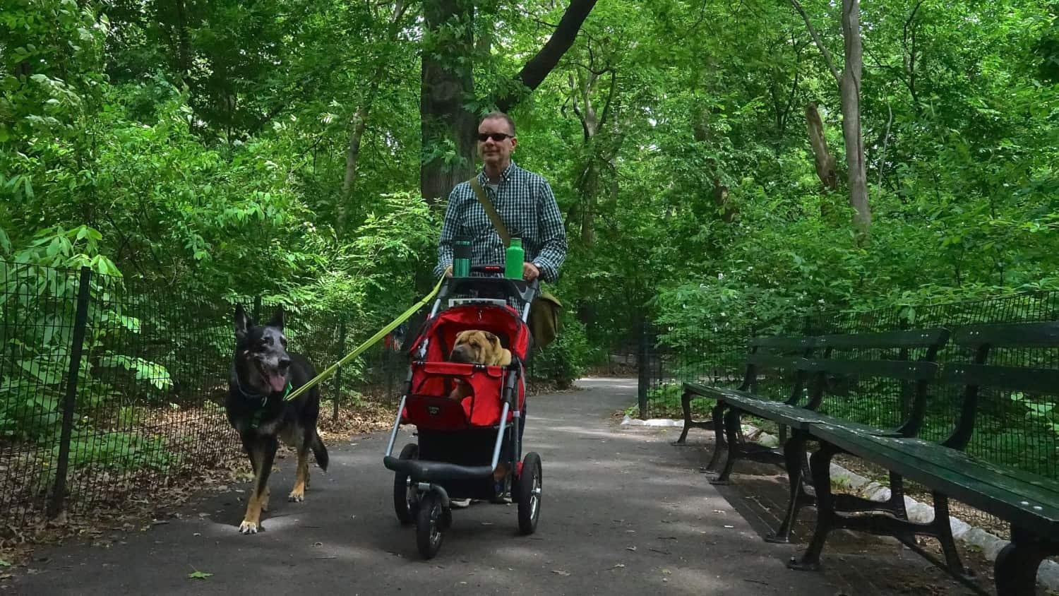New York's Top Pet Friendly Attraction: Central Park | GoPetFriendly.com
