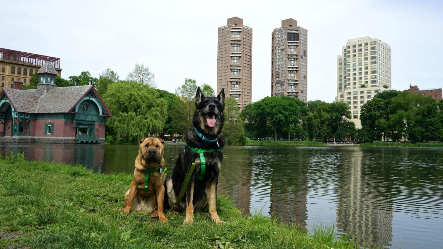 New York's Top Pet Friendly Attraction: Central Park