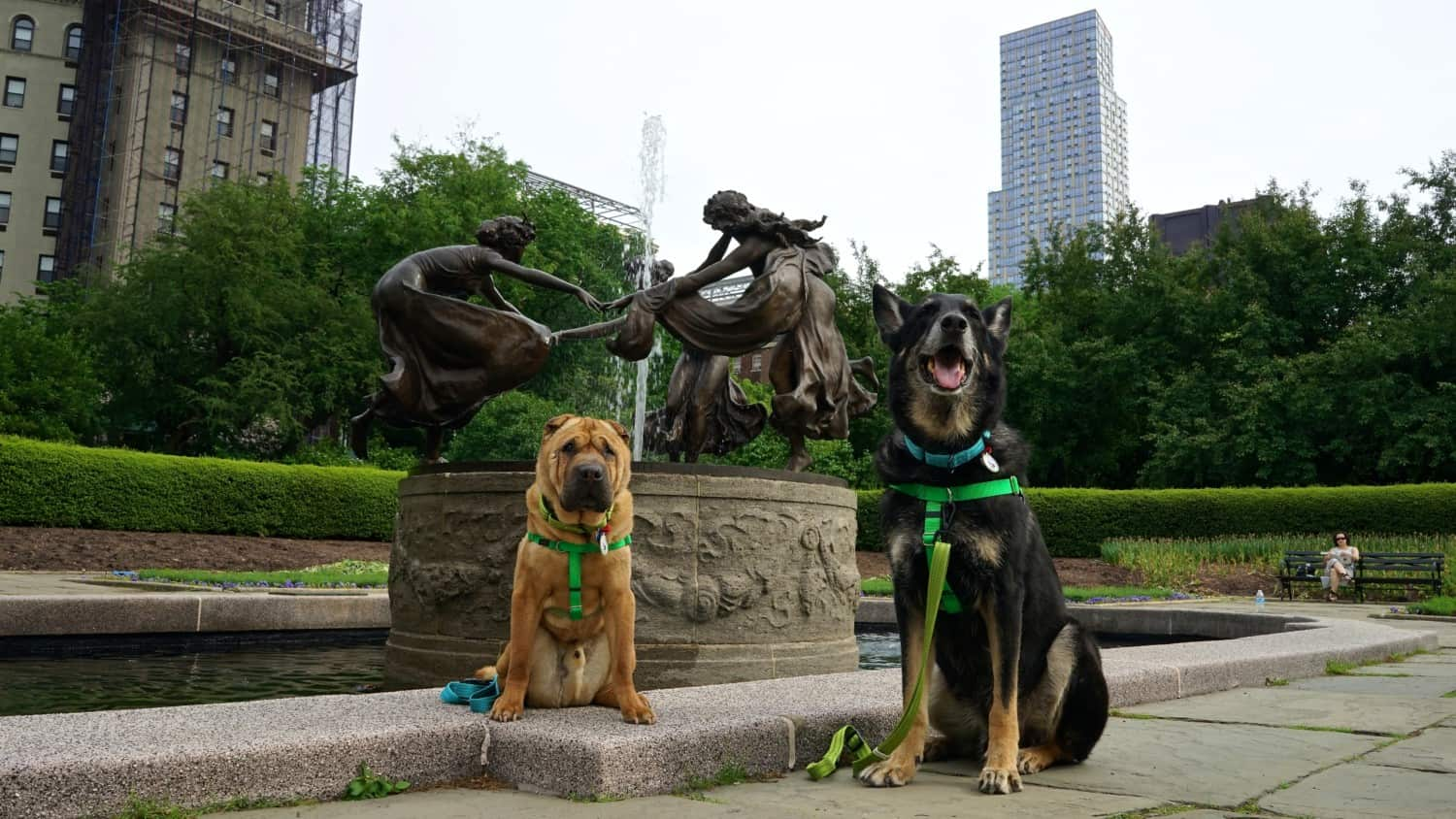 New York's Top Pet Friendly Attraction: Central Park   GoPetFriendly.com