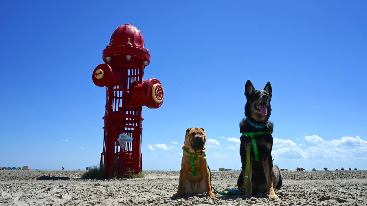 New Jersey's Top Pet Friendly Attraction: Wildwood Dog Beach | GoPetFriendly.com