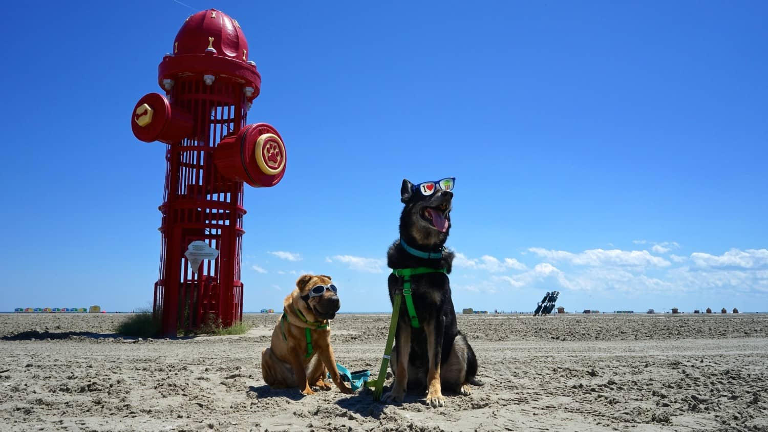 New Jersey's Top Pet Friendly Attraction: Wildwood Dog Beach