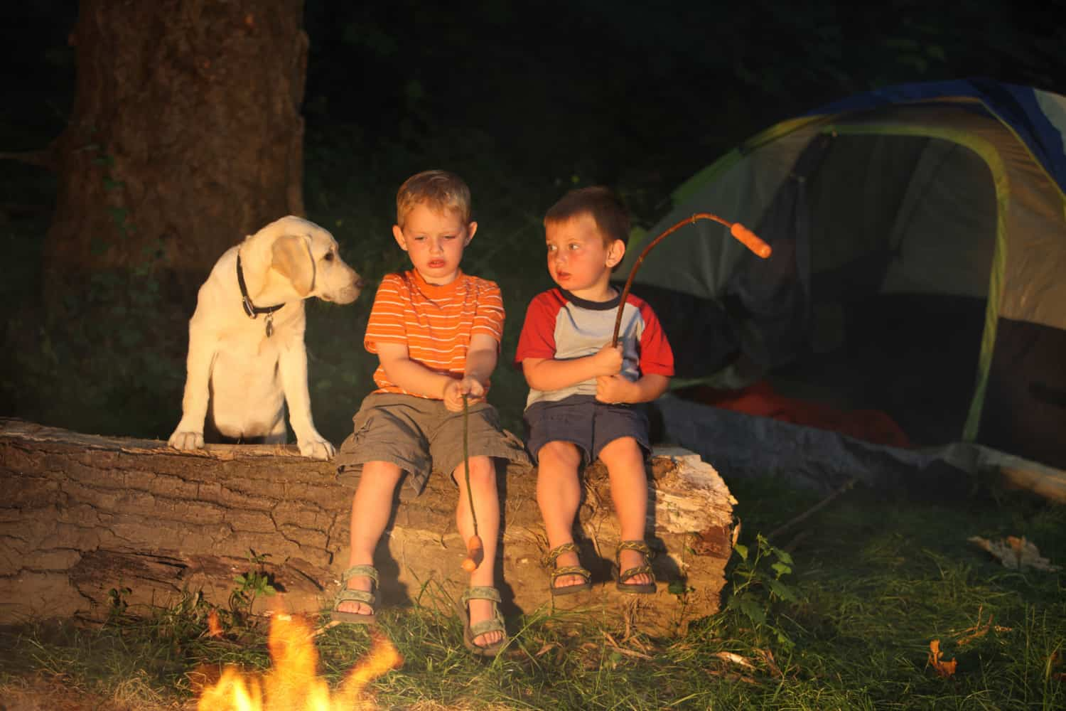 Pet Friendly Campgrounds at America's National Parks | GoPetFriendly.com