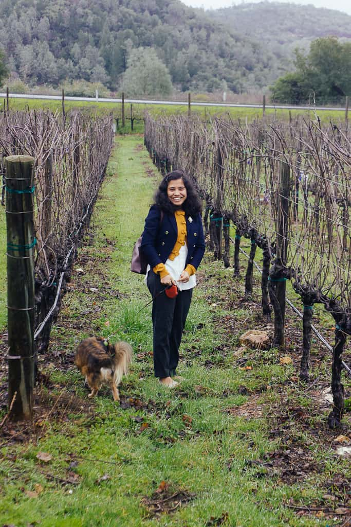 Tips for Enjoying California Wine Country with Your Dog