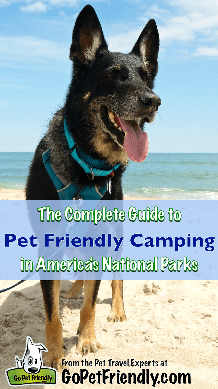 The Complete Guide to Pet Friendly Campgrounds in America's National Park | GoPetFriendly.com