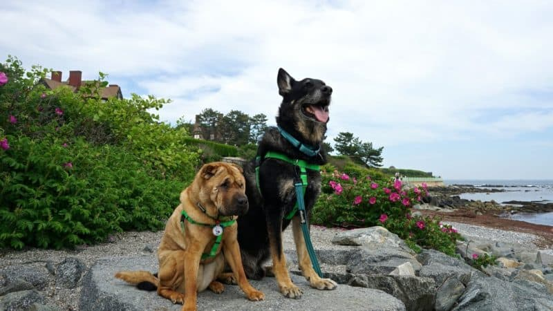 Rhode Island's Top Pet Friendly Attraction: Newport Cliff Walk | GoPetFriendly.com