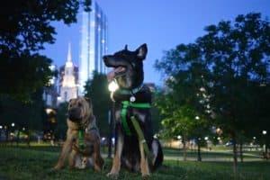 Massachusetts' Top Pet Friendly Attraction: Boston's Freedom Trail | GoPetFriendly.com