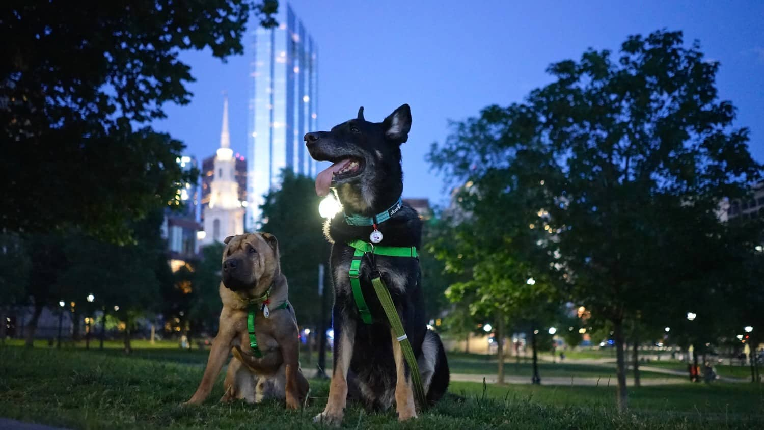Massachusetts' Top Pet Friendly Attraction: Boston's Freedom Trail