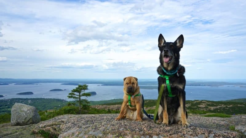 Maine's Top Pet Friendly Attraction: Acadia National Park