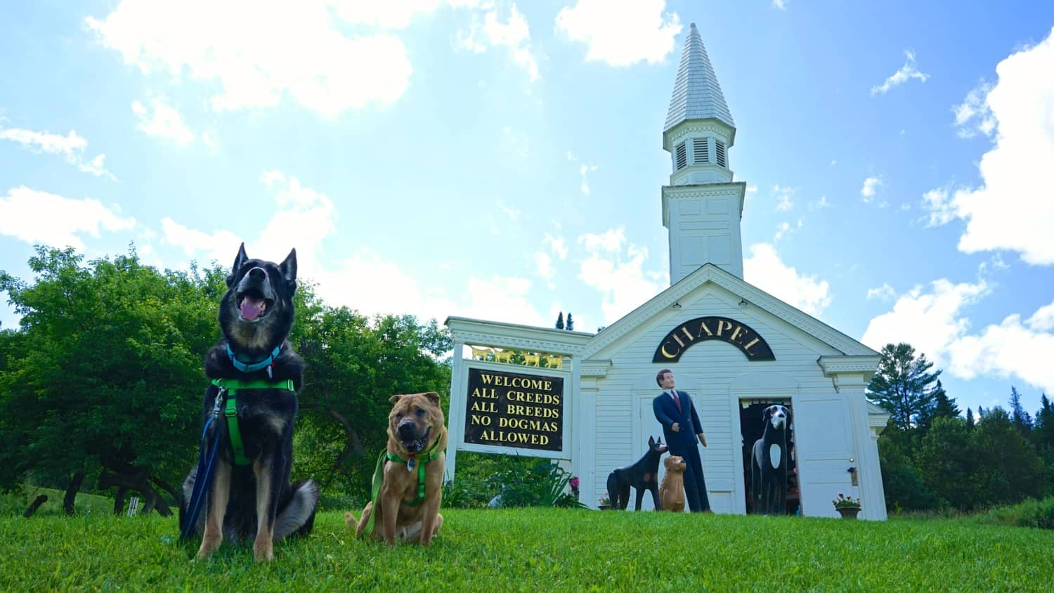Vermont's Top Pet Friendly Attraction: Dog Mountain