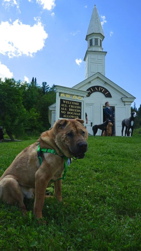 Vermont's Top Pet Friendly Attraction: Dog Mountain | GoPetFriendly.com